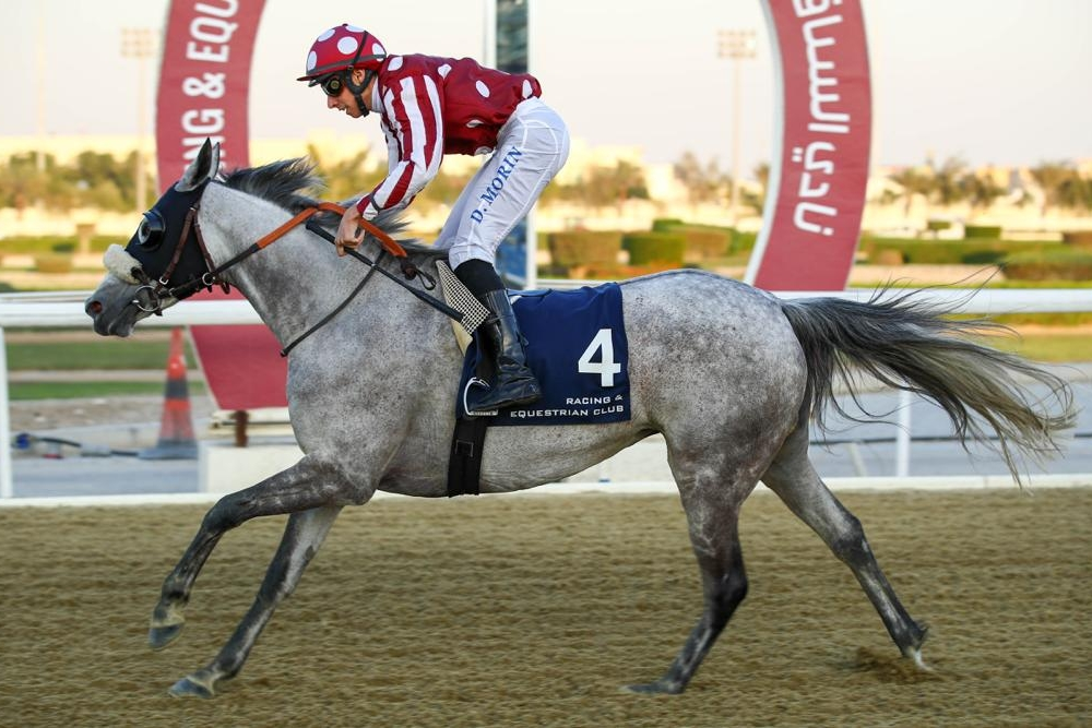 Purebred Arabian Handicap, 1200 m - 13 March 2019