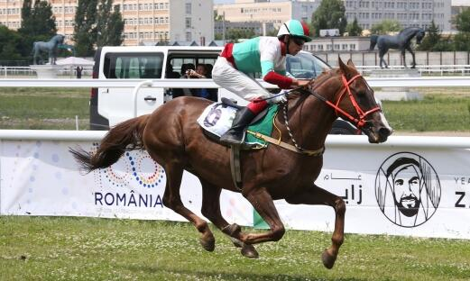 AMEER AL ARAB WINS THE FIRST WATHBA STALLIONS CUP IN ROMANIA