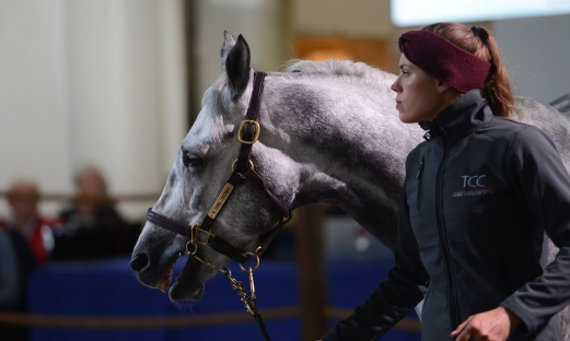 Grand Courgeon Stud Stallion progeny in demand